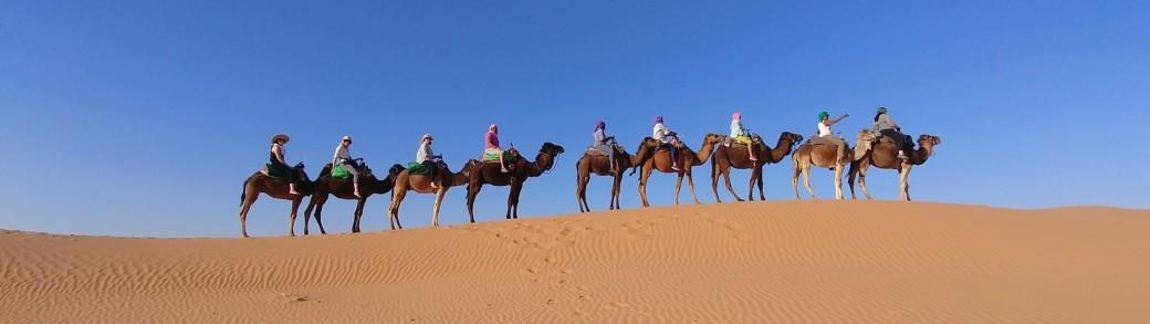 Camel Trek-NARROW